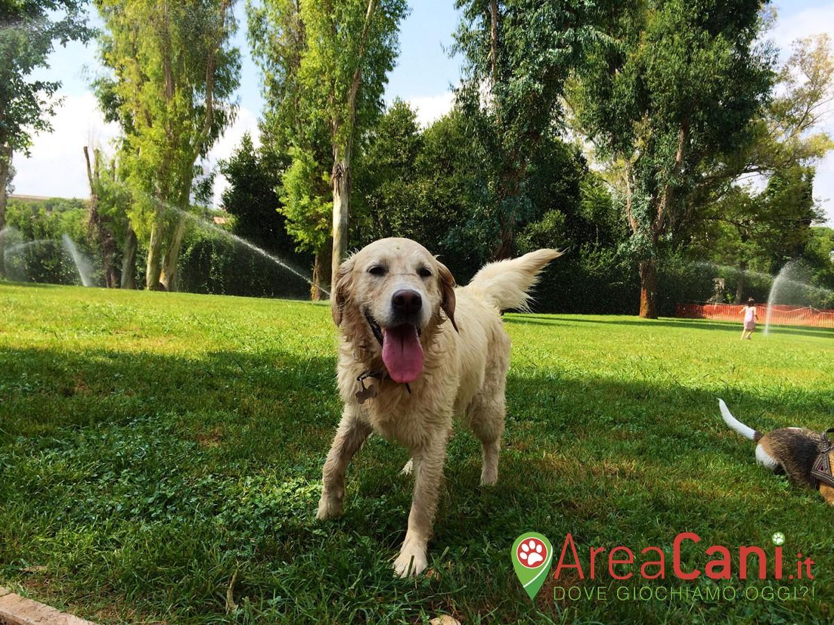 Area Cani Roma - Parco degli Eucalipti