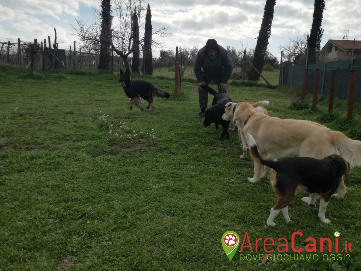 Area Cani Roma - Manu Dog Camp (a pagamento)