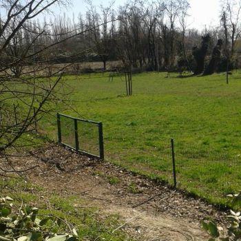 Area Cani Cremona - via Argine Panizza