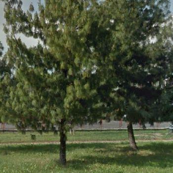 Area Cani Torino - via Olivero