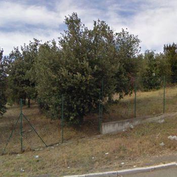 Area Cani Furci - via Stingi